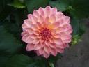 Pink suffusion